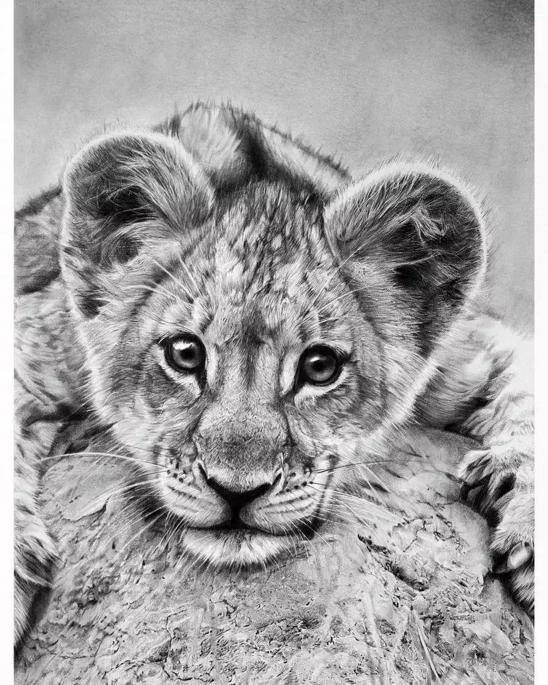 素描动物作品